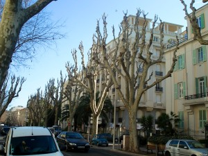 Photo: Strange trees